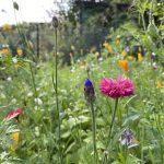 Gartenglück in Nippes #2 – ein Jahresrückblick