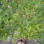 Beet mit Sommerblumen und meinen Füßen
